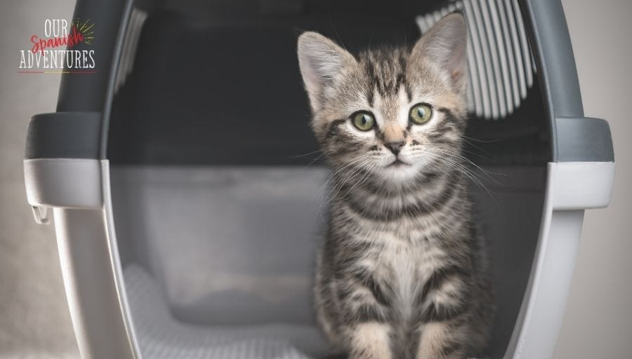 taking pets from the UK to Spain